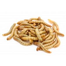 Мучной червь 200шт